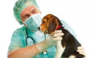 Blutspende für Hunde
