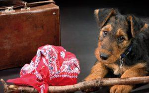 Reiseziele für Hunde