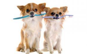 Zahnpflege beginnt im Welpenalter