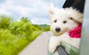 Reisekrankheit-beim-Hund