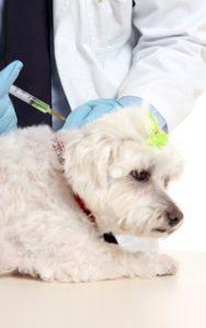 Tollwut-Impfung beim Hund