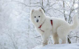 Hund und Zecken im Winter