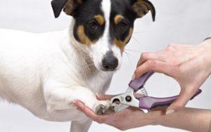 Wie schneide ich meinem Hund richtig die Krallen?