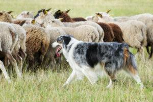Berufe-mit-hund-teil-2