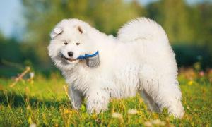 Fellwechsel-beim-Hund