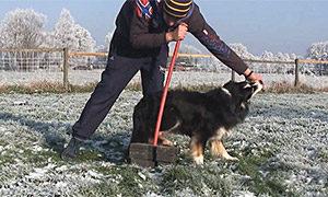 Fitnesstraining-fuer-Hund-und-Halter-Hinterbein-anheben