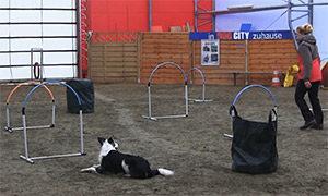 Fitnesstraining für Hund und Halter - Hoopers