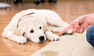 Hilfsmittel in der Hundeerziehung