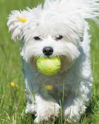 Flyball, eine Sportart für gute Laune