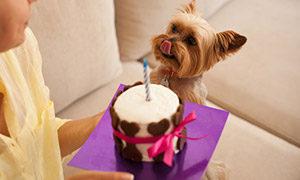 Mein-Hund-hat-Geburtstag