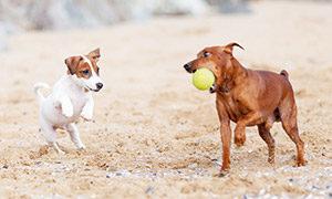 Soziale-Kontakte-fuer-den-Hund