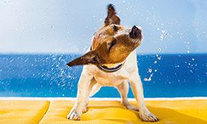 Abkühlung für Hunde