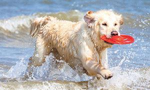 Schwimmregeln für Hunde
