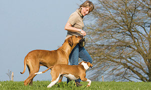 Begleithundetraining Frau mit Hund