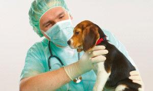 Besuch beim Tierarzt