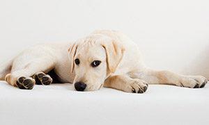 Hundebesuch beim Psychologen