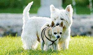 Ein zweiter Hund zieht ein