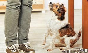 Hund beim betteln