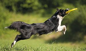 Hund mit Wurfscheibe