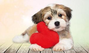 Hund am Valentinstag