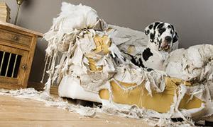 Hund auf kaputtem Sofa