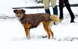 Hundebekleidung für Herbst und Winter