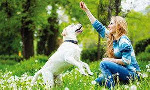 Hundebeschäftigung für draussen