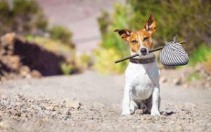 Hundepension - ja oder nein