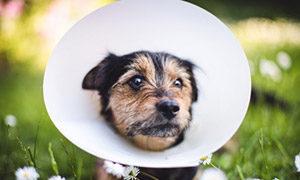 Kastration bei Hunden