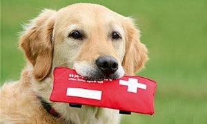 Kleine Verletzungen beim Hund