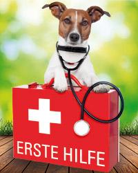 Kleine Verletzungen und Erste Hilfe