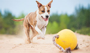 Neue Hundespielzeuge