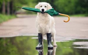 Schietwetter - Der Regenmantel für den Hund