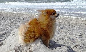 Sylt - Am Strand