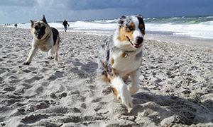 Hundestrände in Europa