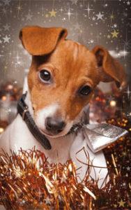 Weihnachtsgeschenk für den Hund