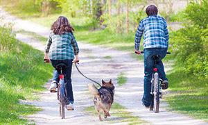 Der Hund am Fahrrad