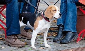 So gewöhnt sich Ihr Hund ans Stadtleben