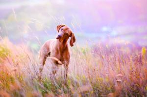 Körpersprache bei Hunden - das Schieflegen des Kopfes