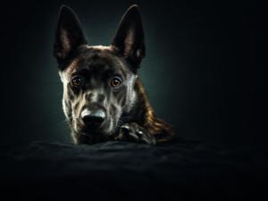 Polizeihunde