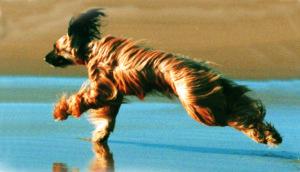 Wattwandern mit Hund