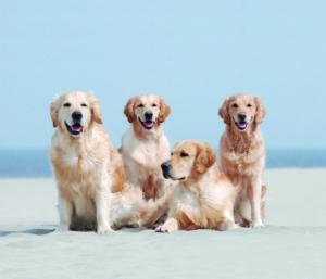 Lernen Sie Hunde zu fotografieren