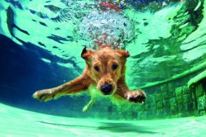 Hunde beim schwimmen
