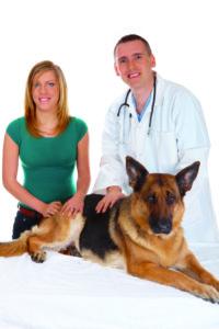 Hunde als Therapiehelfer