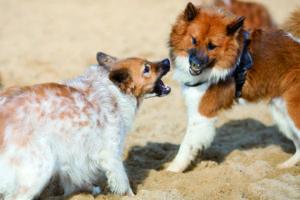 Dominante Hunde