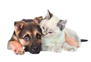 Warum zahlen wir Hundesteuer?