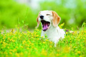Wenn Hunde heulen