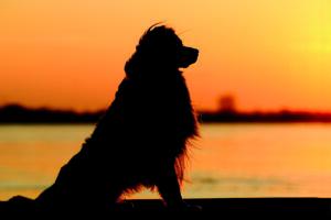 Warum bellen manche Hunde nachts?