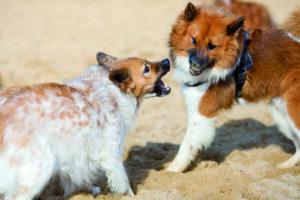 Bissverletzungen bei Hunden